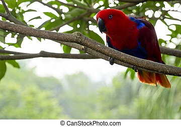 colorful Lory- parrot - a curious Red head Lory standing on...