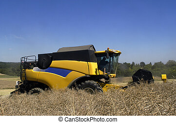 the harvest of colza with machines like a reaping-machine...