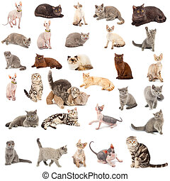 Collection of a cats in different poses and different...