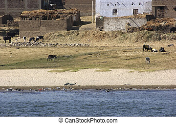 rural scenery at River Nile - rural waterside scenery at...