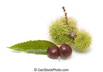 Freshly harvested chestnuts isolated on white background