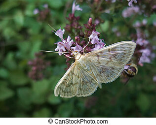 pastel colored small butterfly - small pastel colored...