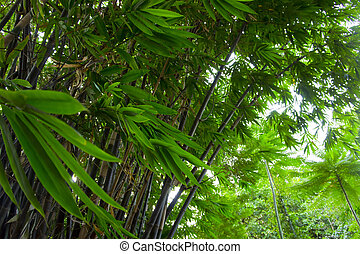 Bamboo leaves in the forest - Bamboo leaves being blown...