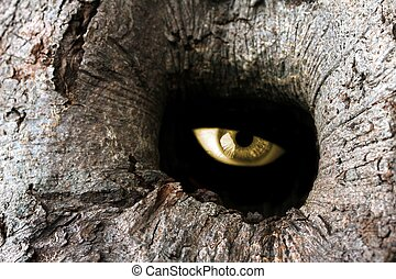 tree hole eye