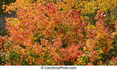 autumn foliage background and wind