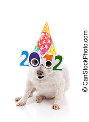 Party Celebrate New Year 2012 - A funny white dog with...
