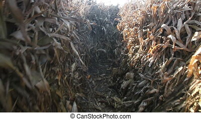 Lost in the maze - Fast running through a corn stalks maze....