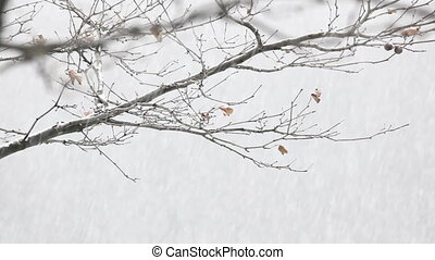 Winter background loop - Winter snow background loopable