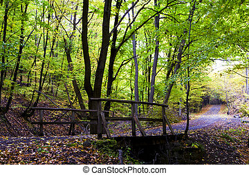 Autumn forest in the mountains, wooden bridge.