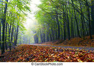 Mountain road in a beautiful autumn forest.