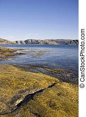 Seaweed and algae at the seaside, Norway