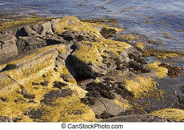 Algae and seaweed in Norway