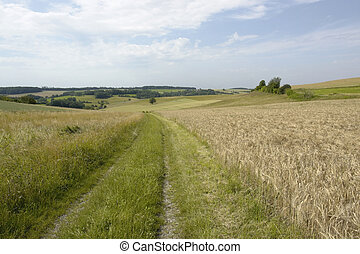 rural panoramic scenery with field path