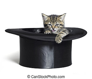 funny kitten in top hat - Studio photography of a funny...