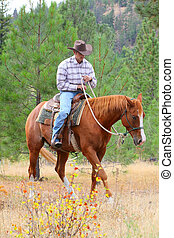 Horse trainer - Young cowboy training his horses in a meadow