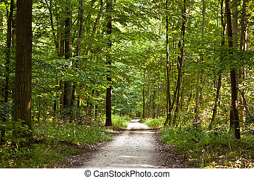 path in forest with beautiful trees in harmony