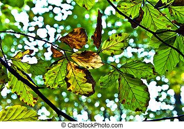 oak leaves in harmony - composition of oak leaves in harmony...