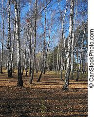 Autumn forest. Landscape