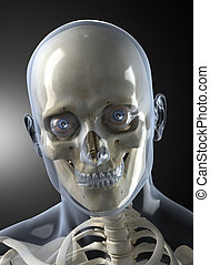 Male Human Head X-ray Front view - Transparent skin concept