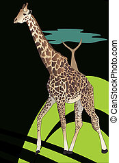Giraffe (Giraffa camelopardalis) in the african savanna