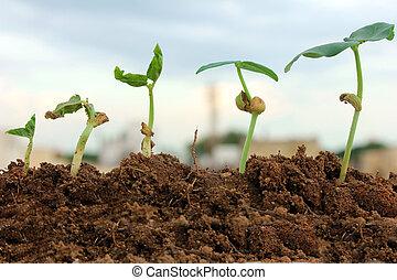 seedlings growing from soil