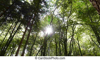 sun in a forest