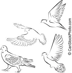 Pigeons, a bird symbol, the illustration. V-Formation,...