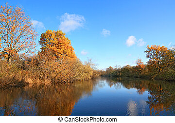 autumn wood on coast river