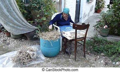 husking soy beans - elderly woman husking soy beans