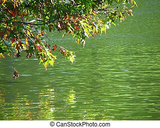 fall leaves over water