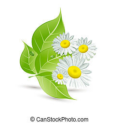 vector background with daisies and green leaves
