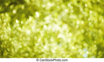 yellow-green leaves soft focus