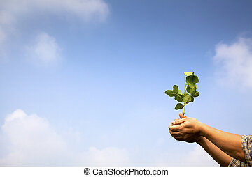 hand of farmer holding young plant with cloud background