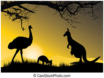 two kangaroo and emu in the evening
