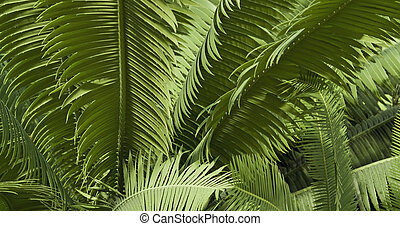 abstract leaves background - natural abstract full frame...