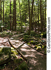 Wooded Walking Path - A community walking path that goes...