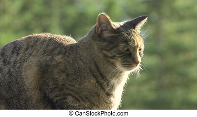 Tabby Cat - Tabby cat sitting on a fence in the sun