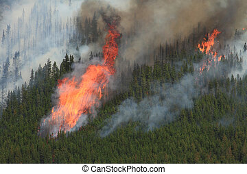 Forest Fire in the Rocky Mountains 12 - Huge flames burning...