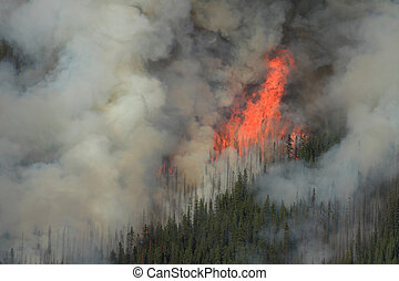 Forest Fire in the Rocky Mountains 07 - Huge flames burning...