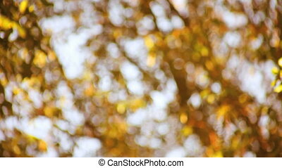 autumn leaves soft focus