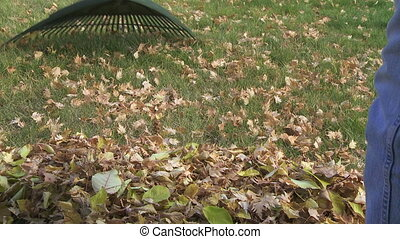 Raking leaves on the lawn