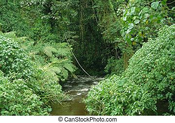 Bwindi Impenetrable Forest in Uganda - vegetation inside the...