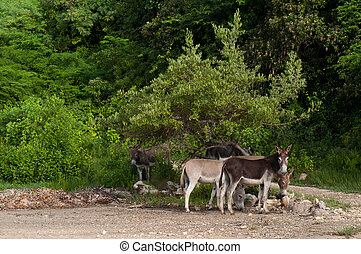 Donkeys - beautiful donkeys in a wildlife landscape at the...