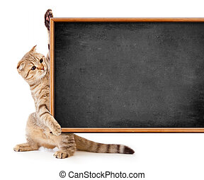 kitten isolated with blackboard for your text