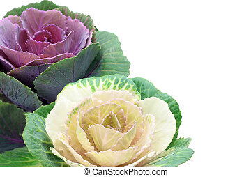 ornamental cabbage - I took ornamental cabbage in a white...