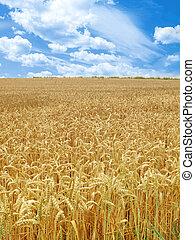 grain field under beautiful sky...