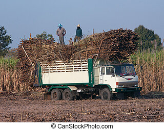 Truck loaded with sugarcane on a sugarcane field in Isan,...