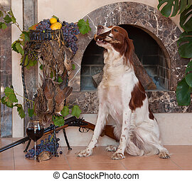 Bird dog - Hunting dog sitting and holding in teeth a bird...
