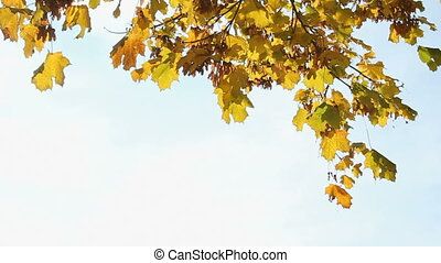 Autumn - Colorfull Autumn