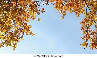 Autumn - Colorfull Autumn